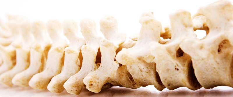trapianto vertebre umane